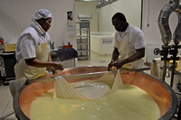 Learning how Parmigiano Reggiano cheese is made.