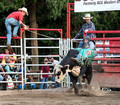 Rodeo at Stegall's Arena in Concord North Carolina